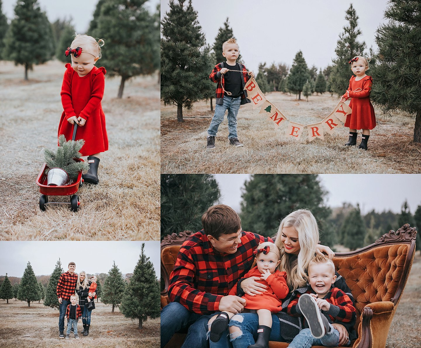 Christmas Tree Farm Mini Sessions.2018 Christmas Tree Farm Mini Session Dallas Tx Holiday